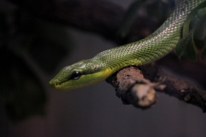 Reptile Exhibit at the Stuttgart Zoo and Botanical Garden.