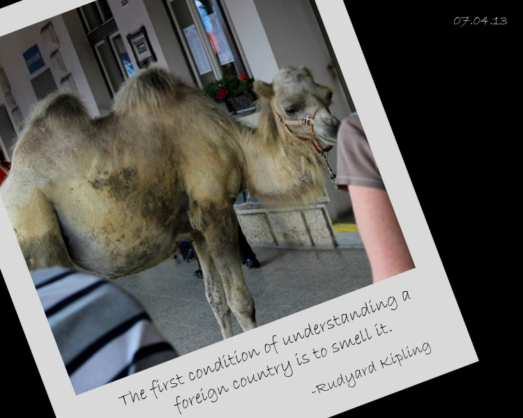 Took this picture at a train station near Karelštejn Castle, but it seems oddly to fit this story well. Camels, am I right?