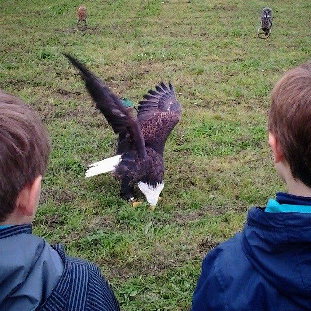 eagle at school