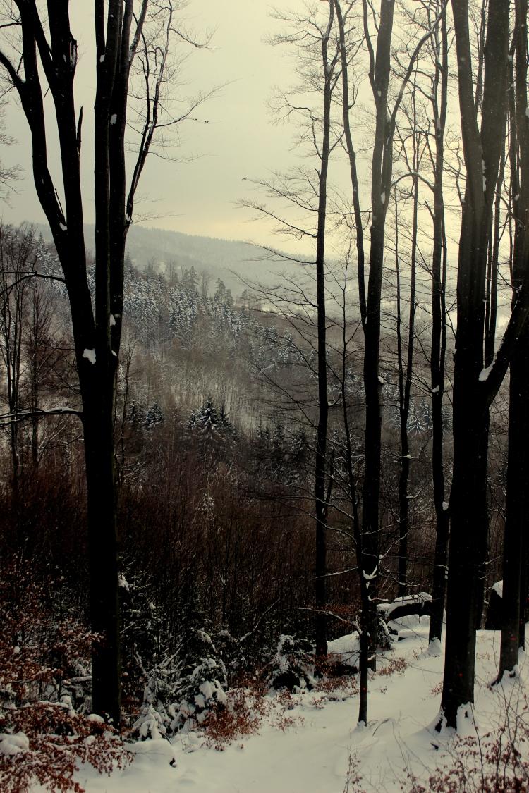 Woods in Liberec, Czech Republic